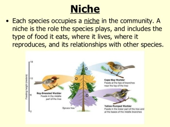 pre-ib-biology-ecology-44-728